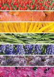Сollage of plants in the order of the colors of the rainbow Royalty Free Stock Image