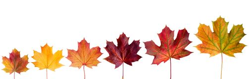 Ð¡ollection beautiful colorful autumn leaves isolated on white background royalty free stock photos