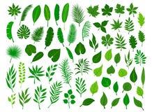 Ollection ustawiający różny zielony tropikalny, lasowy, parkowy drzewo, opuszcza gałąź gałązek rośliien ulistnienie royalty ilustracja