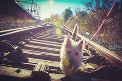 Ollie op de Sporen Stock Foto
