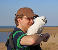 Olly parrot and handler Stock Photos