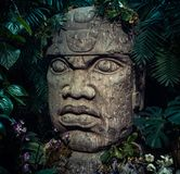 Olmec sculpture carved from stone. Big stone head statue in a jungle Stock Images