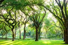 Olmos americanos no Central Park foto de stock