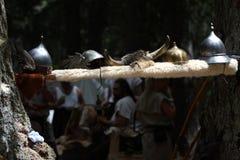 Olmos célticos Foto de archivo libre de regalías