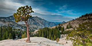 Olmsted point yosemite Royalty Free Stock Photos