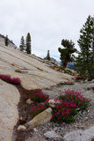 Olmsted punkt - Yosemite obraz royalty free