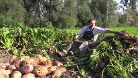 OLOMOUC,捷克, 2017年10月5日:有机生物农场收获了甜菜根beta寻常的var 在堆的rapacea 股票录像