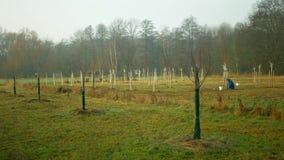 OLOMOUC, CZECH REPUBLIC, DECEMBER 15, 2019: Planting fruit trees on meadow near floodplain forest. White protects