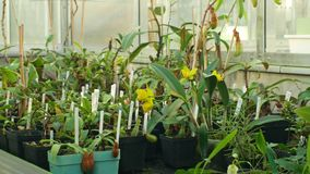 Olomouc, Czech Republic, November 28, 2018: Tropical greenhouse and a collection of rare endangered and legally. Tropical greenhouse and a collection of rare stock video