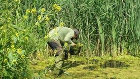 Olomouc, República Checa, o 30 de maio de 2019: Homem do zoólogo em anfíbios de captura ou snagging para monitorar posta em perig video estoque