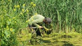Olomouc, República Checa, o 30 de maio de 2019: Homem do zoólogo em anfíbios de captura ou snagging para monitorar posta em perig filme