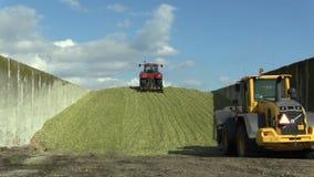Olomouc, repubblica Ceca, il 4 settembre 2016: il mucchio del silaggio del cereale in pozzo concreto, speciale ha spinto il magnu archivi video