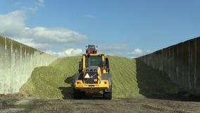 OLOMOUC, REPUBBLICA CECA, IL 4 SETTEMBRE 2016: Mucchio del silaggio del cereale in pozzo, nella ruota Volvo del caricatore ed in  archivi video