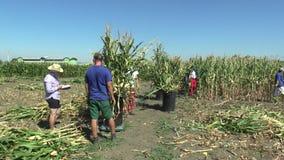 Olomouc, repubblica Ceca, il 2 settembre 2018: Raccogliendo il cereale del mais manualmente con un machete nel campo con i lavora archivi video