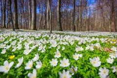 Olor de la primavera Imágenes de archivo libres de regalías