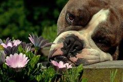 Olor del dogo las flores fotos de archivo