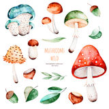 Olorful autumn collection with 15 watercolor elements. stock illustration