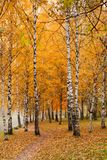 Сolorful autumn park Royalty Free Stock Photography