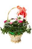 ?olorful-Blumen. Stockfotos