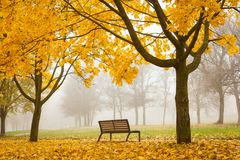 Сolorful foggy autumn park with bench Stock Photo