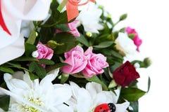 Сolorful kwiaty. Zdjęcie Royalty Free