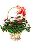 Сolorful kwiaty. Zdjęcia Stock