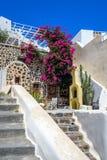 Olorful tystar trädgården med härliga blommor och klassisk traditionell arkitektur i Santorini Arkivbild