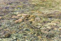 Olorful underwater corals . Corals under sea surface. Ocean nature. Lagoon wildlife. Undersea background. Colorful underwater corals . Corals under sea surface royalty free stock photos
