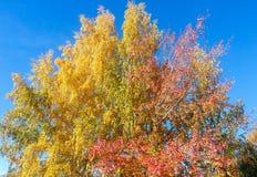 Olors Ð ¡ van de herfst Stock Afbeelding
