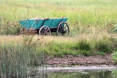 Olr cart abandoned in the swamp Stock Images