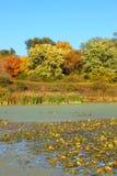 Olson sjö nordliga Illinois Arkivbilder