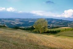 Oltrepo Pavese Италия, сельский ландшафт на лете стоковые фотографии rf
