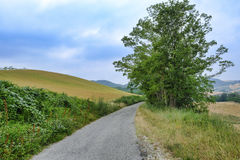 Oltrepo Pavese Italy, rural landscape at summer Royalty Free Stock Photography