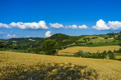 Oltrepo Pavese landscape. Color image Royalty Free Stock Image