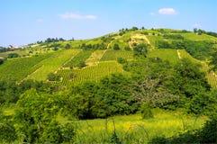 Oltrepo Pavese springtime landscape. Stock Image
