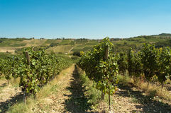 Oltrepo Pavese Vineyards Italy Royalty Free Stock Images