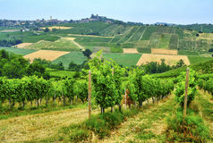 Oltrepo Piacentino意大利,农村风景在夏天 免版税库存图片