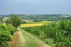 Oltrepo Piacentino意大利,农村风景在夏天 图库摄影