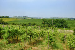 Oltrepo Piacentino意大利,农村风景在夏天 库存图片