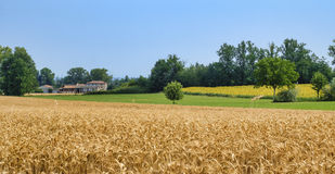 Oltrepo Piacentino Italie, paysage rural à l'été Photo stock