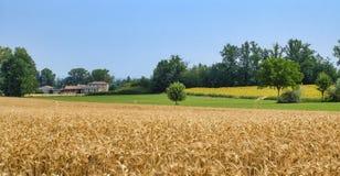 Oltrepo Piacentino Włochy, wiejski krajobraz przy latem Zdjęcie Stock