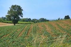 Oltrepo Piacentino Włochy, wiejski krajobraz przy latem Obraz Stock