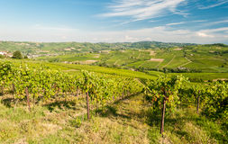 Oltrepo& x27小山的葡萄园;Pavese,在帕尔瓦附近 免版税库存照片