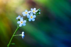 Olvídeme no las flores sobre fondo borroso imagen de archivo libre de regalías