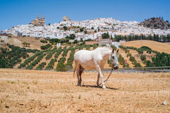 Olvera in Andalusia. The wonderful white village of Olvera in Andalusia Royalty Free Stock Photography