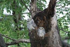 Olw. Animal nest park cute stock photos