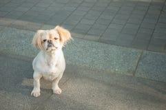 olycklig hund Arkivfoto