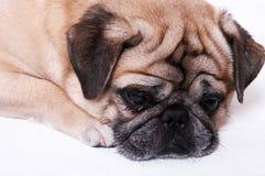 olycklig hund Arkivfoton