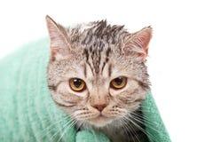 olycklig katt Arkivbilder