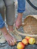 Olycklig kvinna med spillda äpplen Arkivfoto